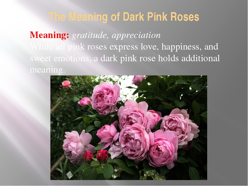 The Meaning of Dark Pink Roses Meaning: gratitude, appreciation While all pin...