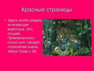 Красные страницы Здесь особо редкие, исчезающие животные. Это лошадь Пржеваль