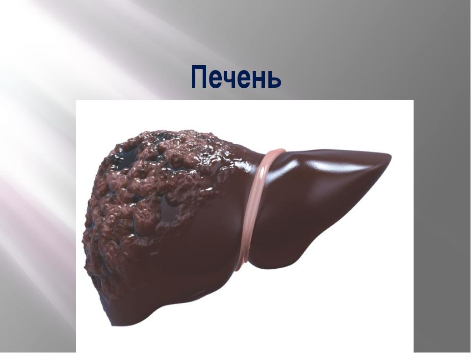 Печень