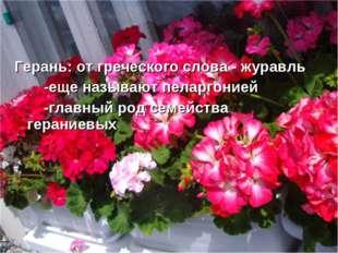Герань: от греческого слова - журавль -еще называют пеларгонией -главный род