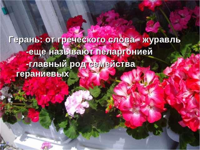 Герань: от греческого слова - журавль -еще называют пеларгонией -главный род...