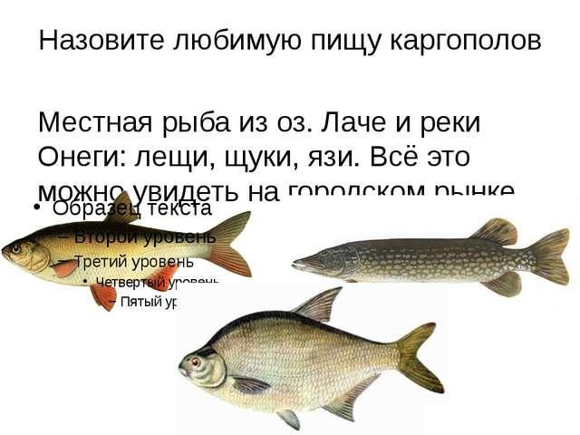 Назовите любимую пищу каргополов Местная рыба из оз. Лаче и реки Онеги: лещи,...
