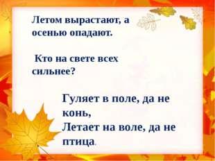Летом вырастают, а осенью опадают. Кто на свете всех сильнее? Гуляет в поле,
