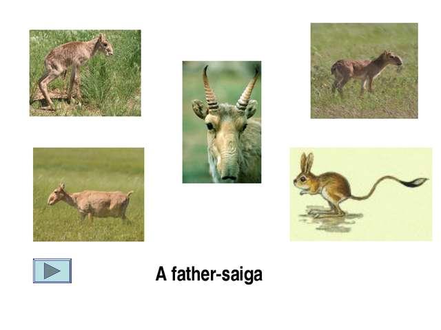 A father-saiga