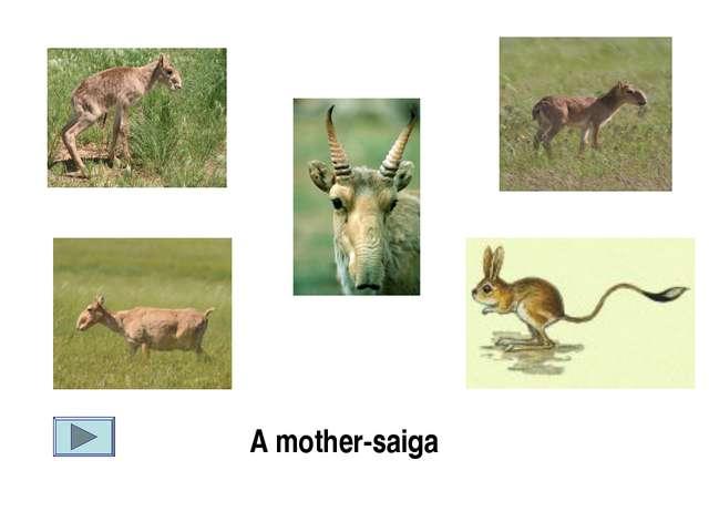 A mother-saiga