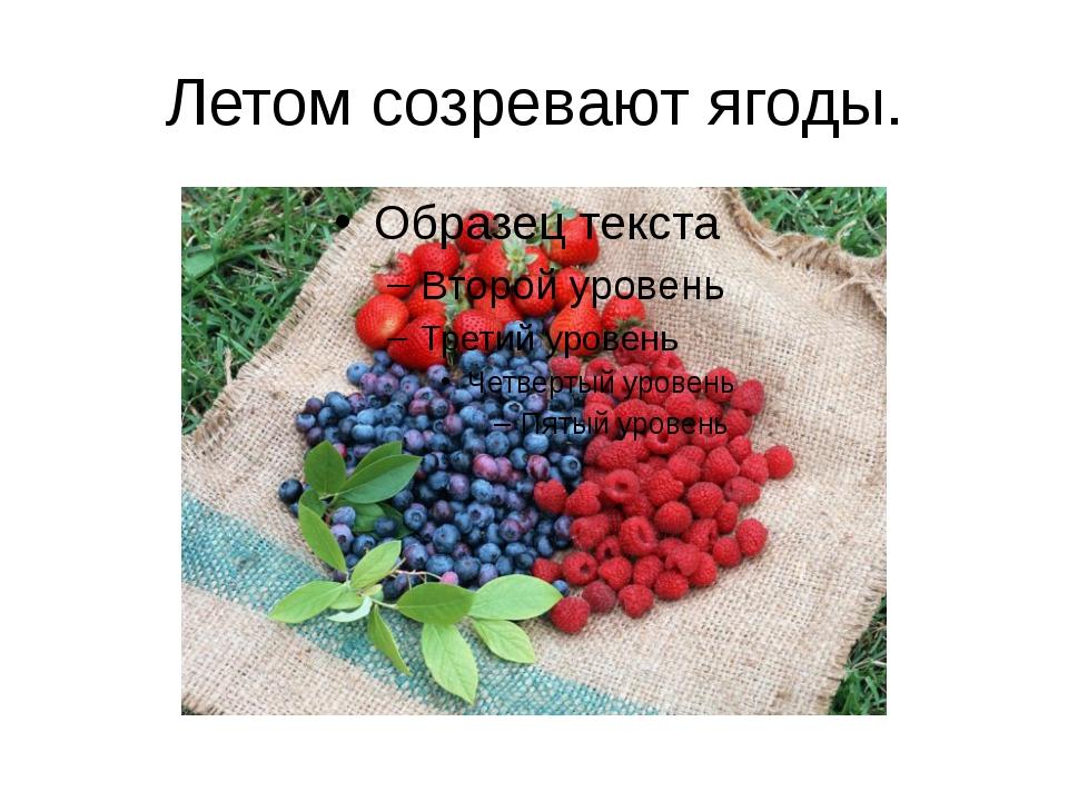 Летом созревают ягоды.