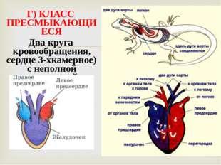 Г) КЛАСС ПРЕСМЫКАЮЩИЕСЯ Два круга кровообращения, сердце 3-хкамерное) с непол
