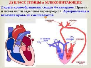 Д) КЛАСС ПТИЦЫ и МЛЕКОПИТАЮЩИЕ 2 круга кровообращения, сердце 4-хкамерное. Пр