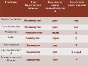 Тип/КлассТип Кровеносной системыКоличество кругов кровообращенияКоличество