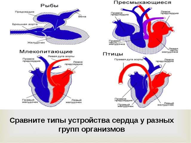 Сравните типы устройства сердца у разных групп организмов