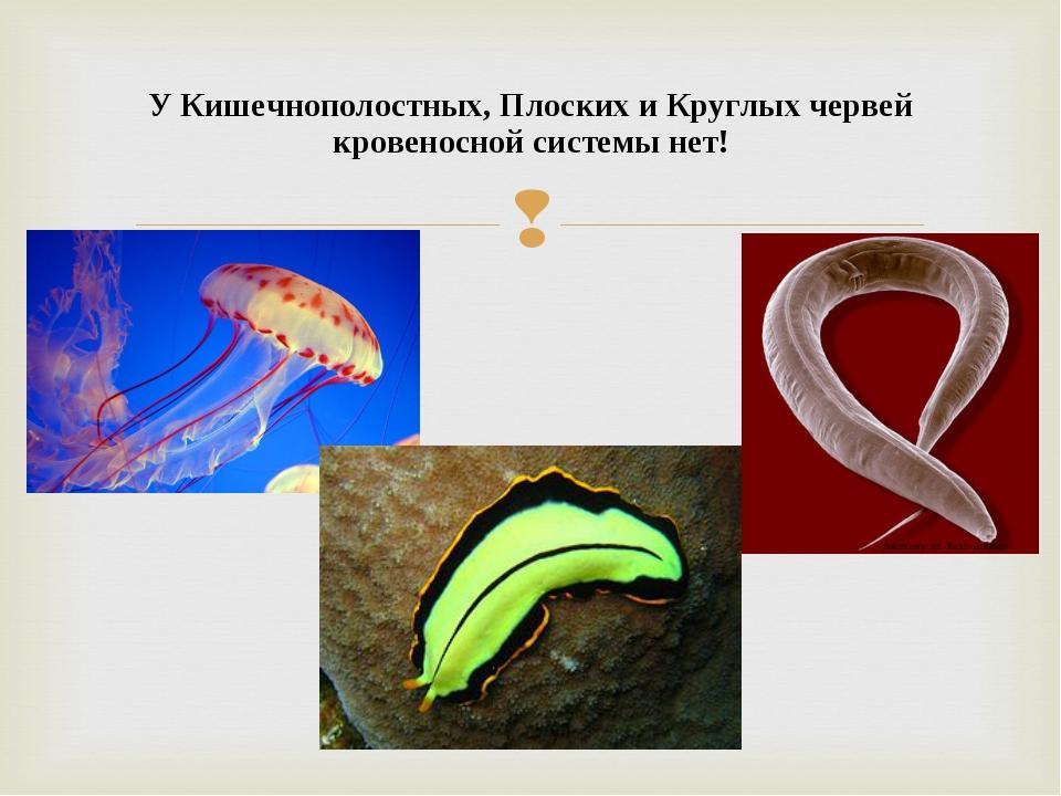 У Кишечнополостных, Плоских и Круглых червей кровеносной системы нет!