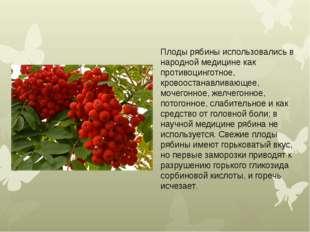 Плоды рябины использовались в народной медицинекак противоцинготное, кровоос