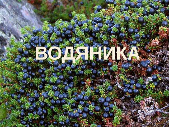 ВОДЯНИКА