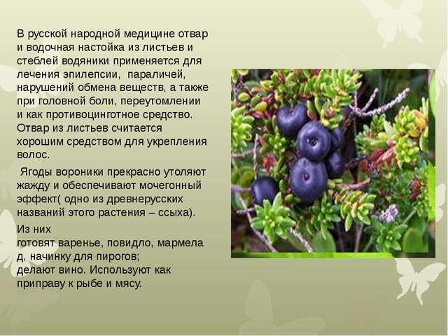 В русской народной медицине отвар и водочная настойка из листьев и стеблей во...