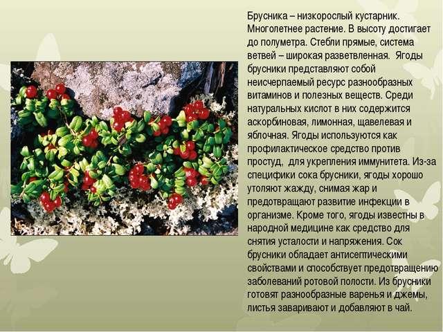 Брусника – низкорослый кустарник. Многолетнее растение. В высоту достигает до...