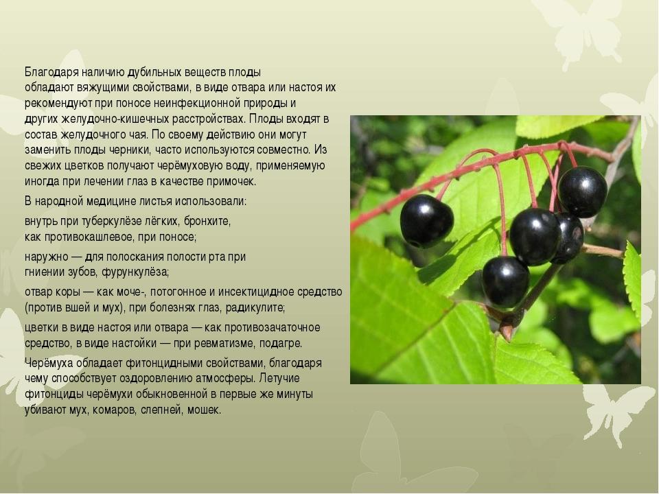 Благодаря наличию дубильных веществ плоды обладаютвяжущимисвойствами, в вид...