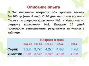 Описание опыта В 3-х месячном возрасте оба кролика весили 3кг.200 гр (живой