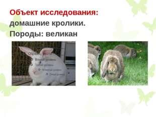 Объект исследования: домашние кролики. Породы: великан
