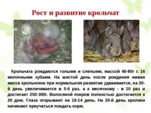 Рост и развитие крольчат Крольчата рождаются голыми и слепыми, массой 40-80г
