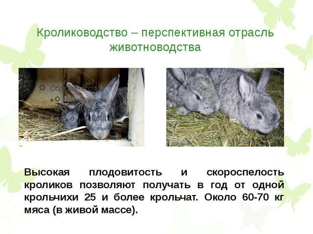 Кролиководство – перспективная отрасль животноводства Высокая плодовитость и...