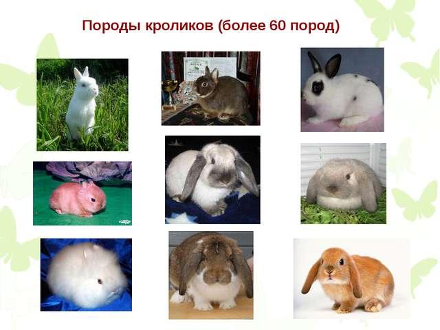 Породы кроликов (более 60 пород)