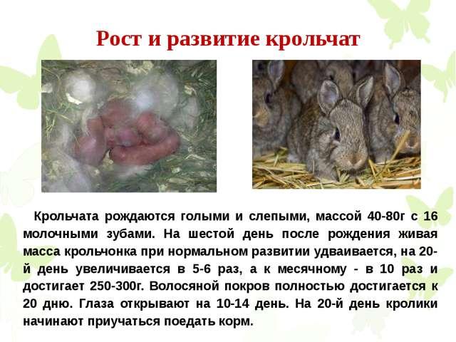 Рост и развитие крольчат Крольчата рождаются голыми и слепыми, массой 40-80г...