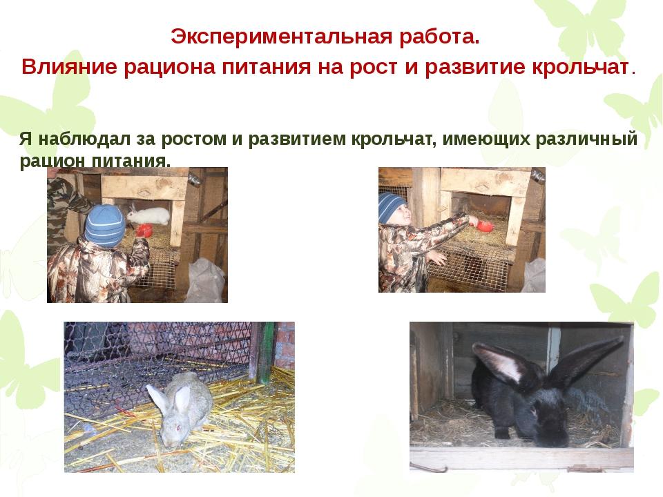 Экспериментальная работа. Влияние рациона питания на рост и развитие крольчат...
