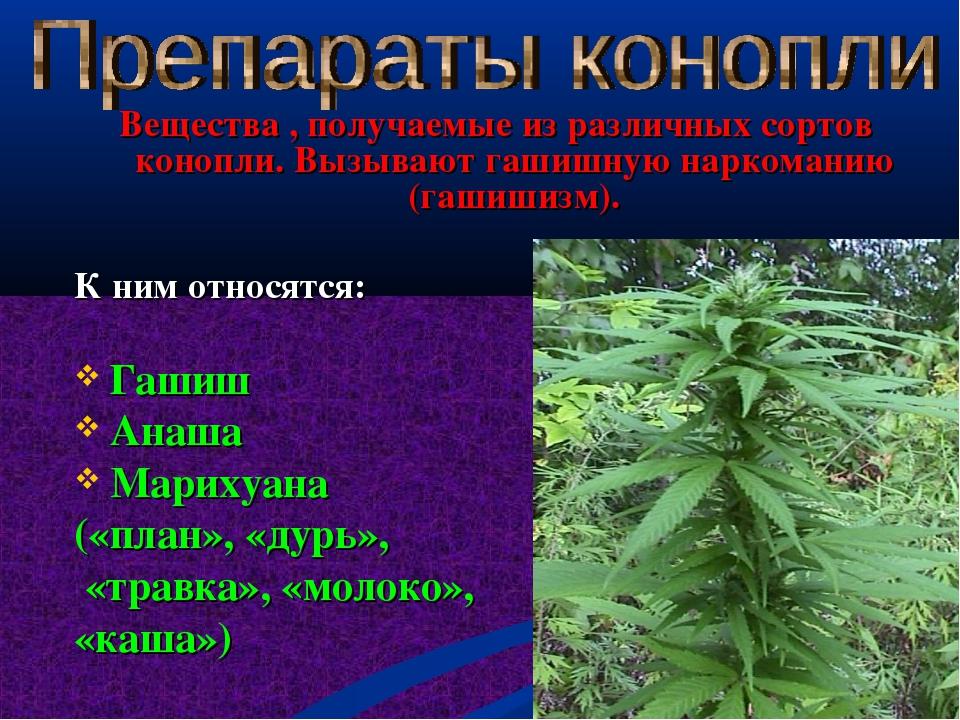 Вещества , получаемые из различных сортов конопли. Вызывают гашишную наркома...