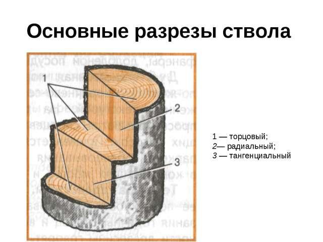Основные разрезы ствола 1 — торцовый; 2— радиальный; 3 — тангенциальный
