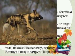 2. ПРЯТКИ Мелкие животные не могут спастись бегством от более быстрых хищнико