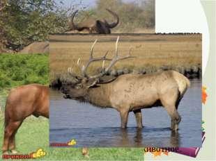 4. ДОСПЕХИ Есть животные, которые способны активно себя защищать с помощью ос