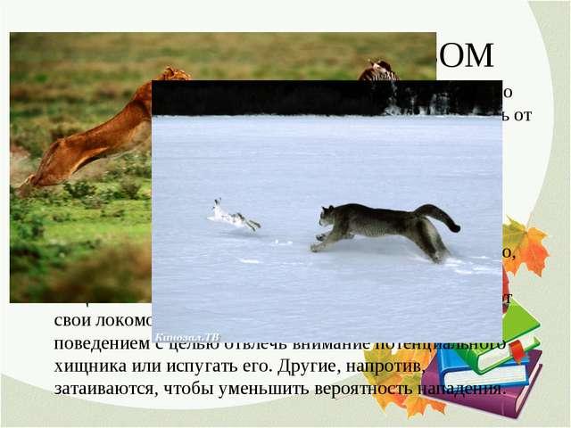 1. СПАСЕНИЕ БЕГСТВОМ Большинство животных имеют огромное преимущество перед р...