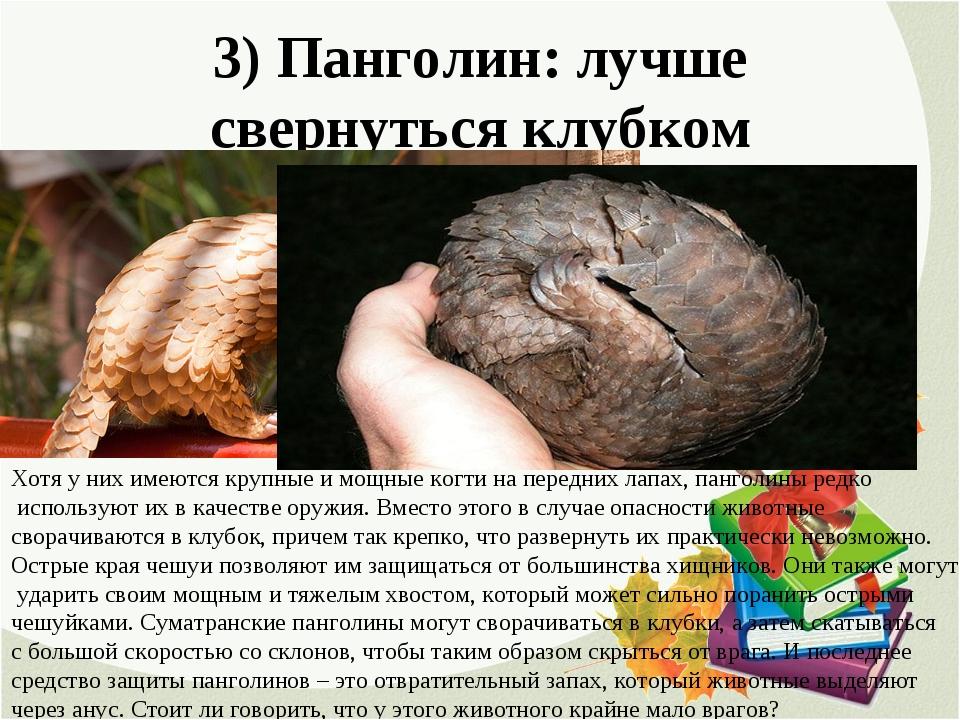 3) Панголин: лучше свернуться клубком Хотя у них имеются крупные и мощные ког...