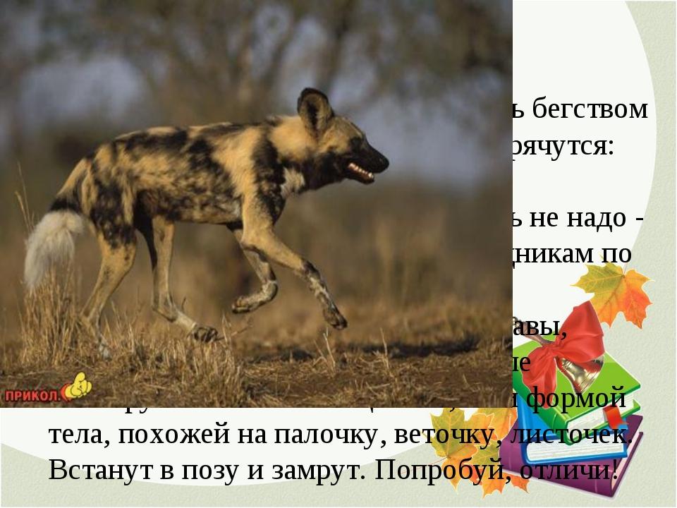 2. ПРЯТКИ Мелкие животные не могут спастись бегством от более быстрых хищнико...