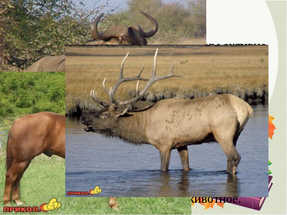 4. ДОСПЕХИ Есть животные, которые способны активно себя защищать с помощью ос...