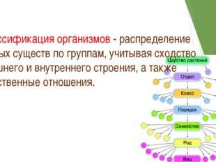 Классификация организмов - распределение живых существ по группам, учитывая с