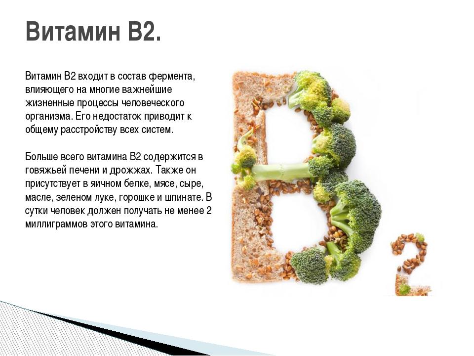 Витамин B2 входит в состав фермента, влияющего на многие важнейшие жизненные...