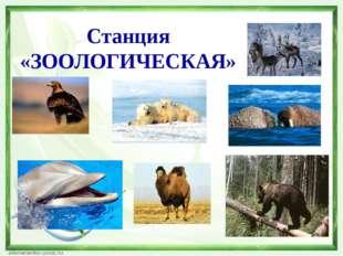 Цели урока Систематизировать знания, умения и навыки учащихся о животном и ра