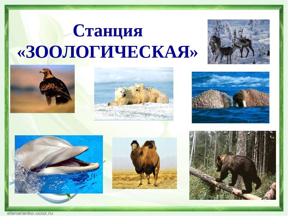 Цели урока Систематизировать знания, умения и навыки учащихся о животном и ра...