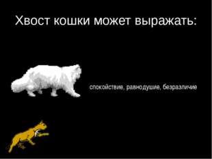 Хвост кошки может выражать: