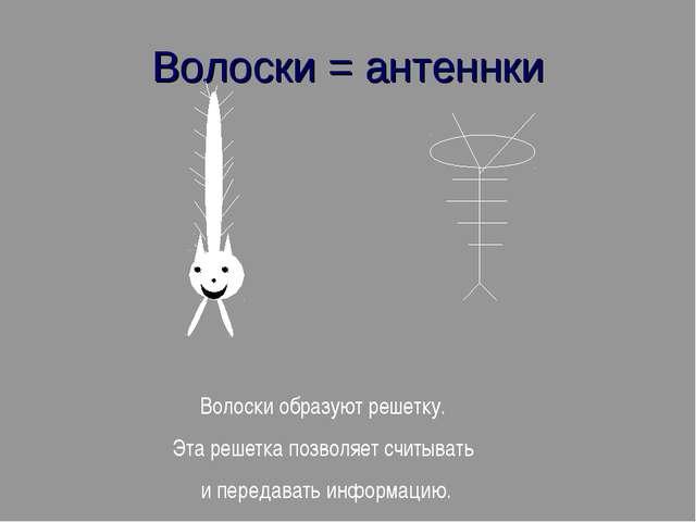 Волоски = антеннки Волоски образуют решетку. Эта решетка позволяет считывать...