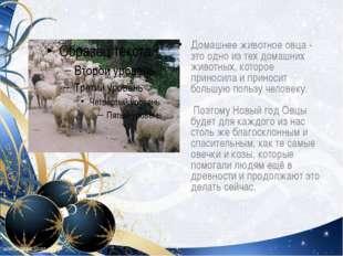 Домашнее животное овца - это одно из тех домашних животных, которое приносила