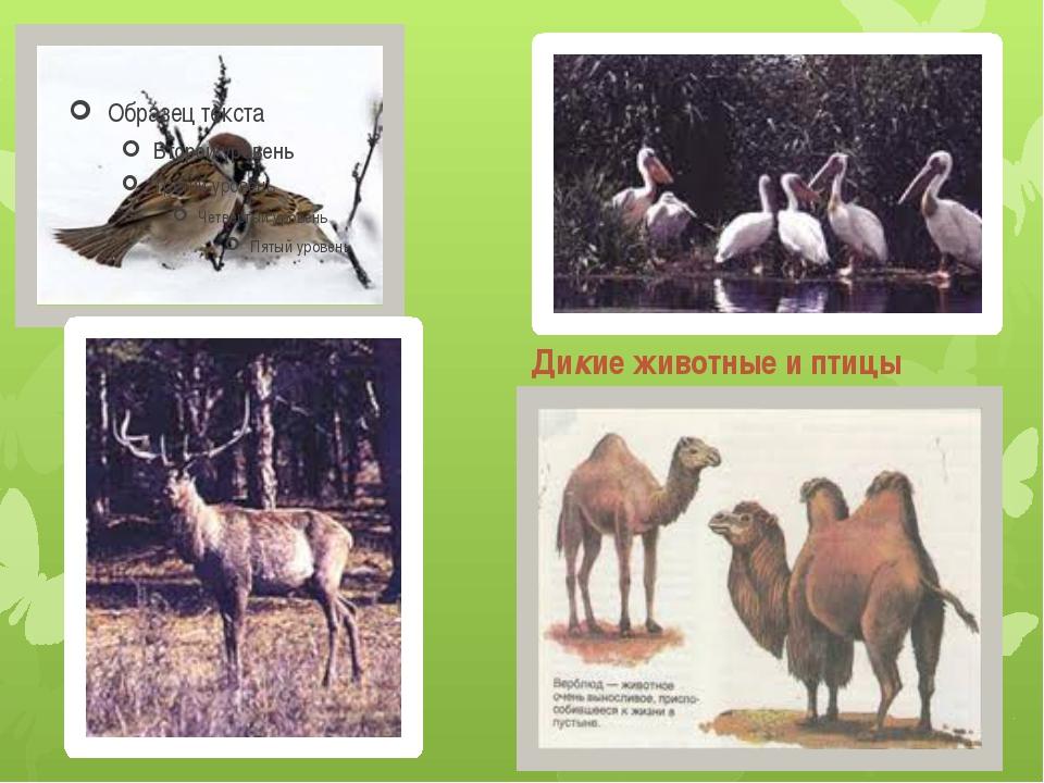 Дикие животные и птицы