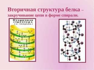 Вторичная структура белка – закручивание цепи в форме спирали.