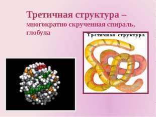 Третичная структура – многократно скрученная спираль, глобула