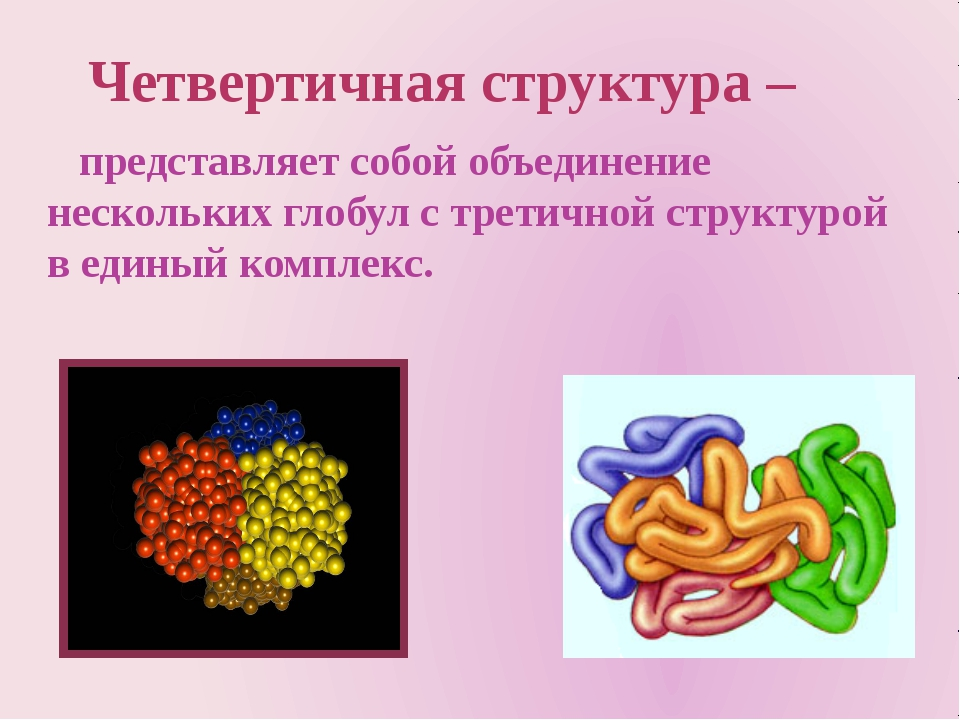 представляет собой объединение нескольких глобул с третичной структурой в ед...