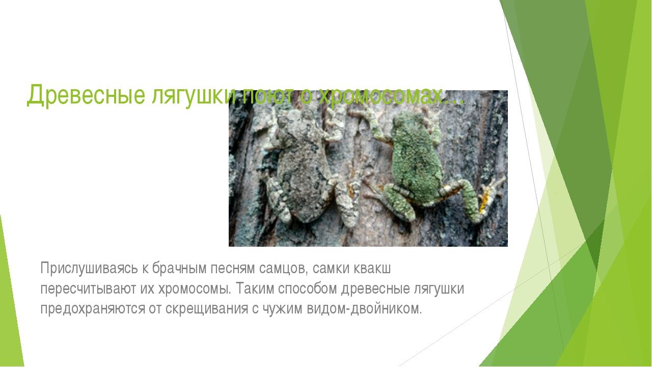 Древесные лягушки поют о хромосомах… Прислушиваясь к брачным песням самцов, с...