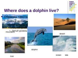 Where does a dolphin live? mountains desert dolphin ocean sea river