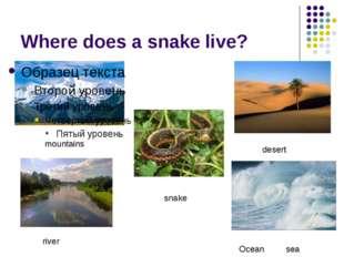 Where does a snake live? mountains desert snake river Ocean sea