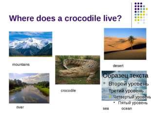 Where does a crocodile live? mountains desert crocodile sea ocean river